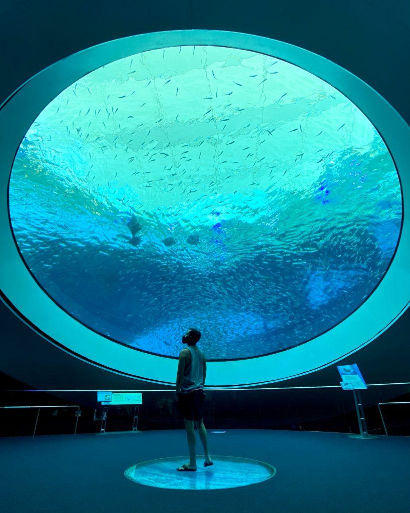 man at aquarium in the Frost Museum Miami